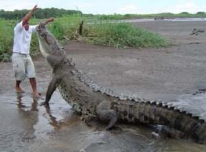Alligatore non domato da Apologia del piano B